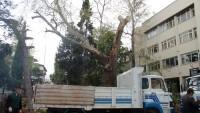 Ağaç Kesme Olayına Park ve Bahçeler Sorumlusu Mehmet Özcan da Açıklama Getirdi