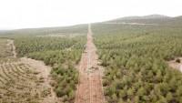 Dinar Orman Sahalarına Biberiye ve Lavanta Dikimi Gerçekleştirildi
