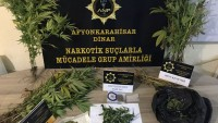 Dinar Narkotik 46 Kök Hint Keneviri yakaladı